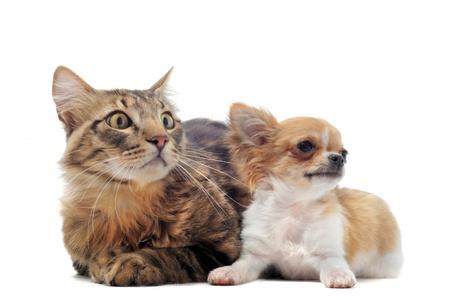kutya betegségek magas vérnyomás