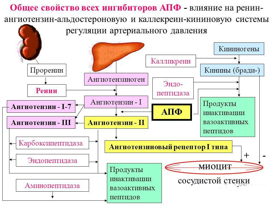 magas vérnyomás étkezési táblázat