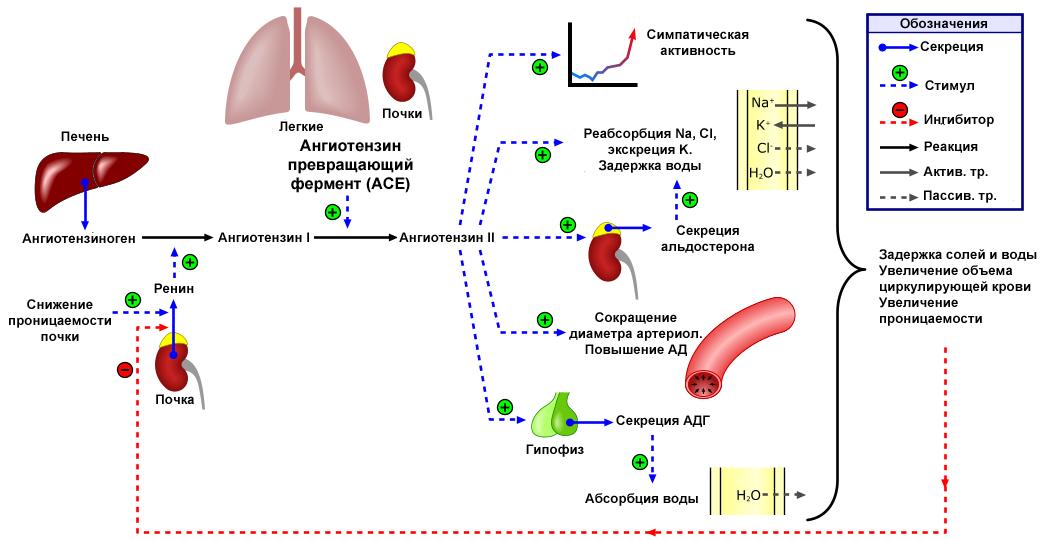 Az eutirox magas vérnyomás esetén alkalmazható
