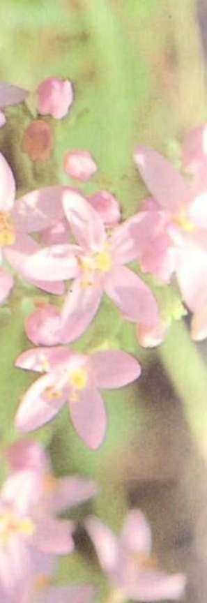 hipertóniát kezelő növények