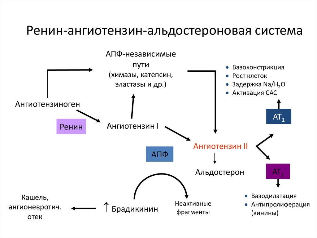 magas vérnyomás 2 fokos CVD 2 kockázata)