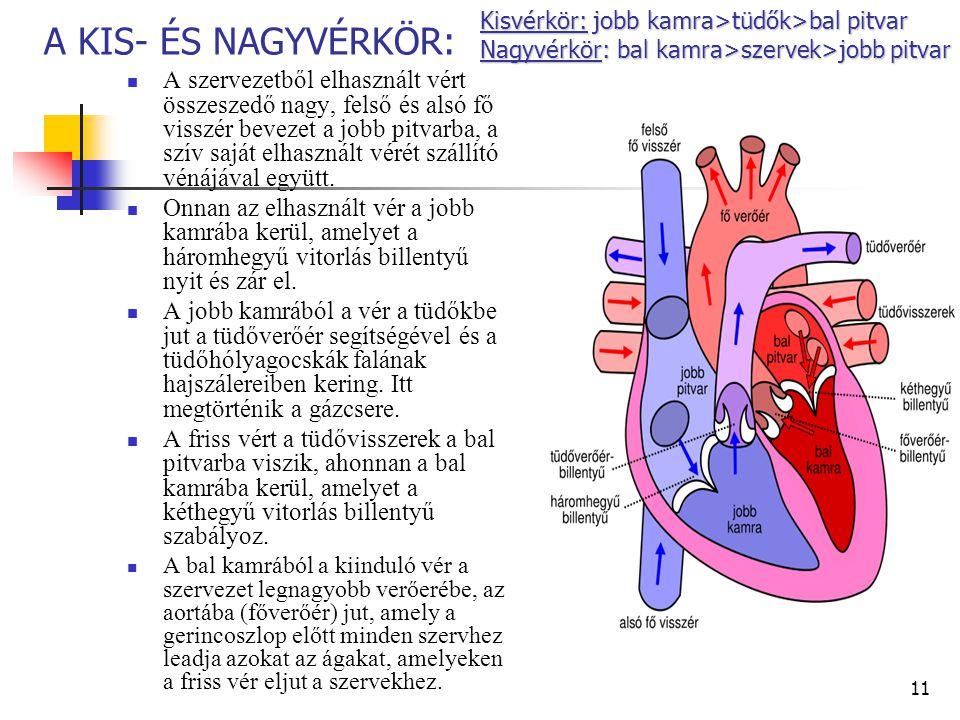 magas vérnyomás a pulmonalis keringésben