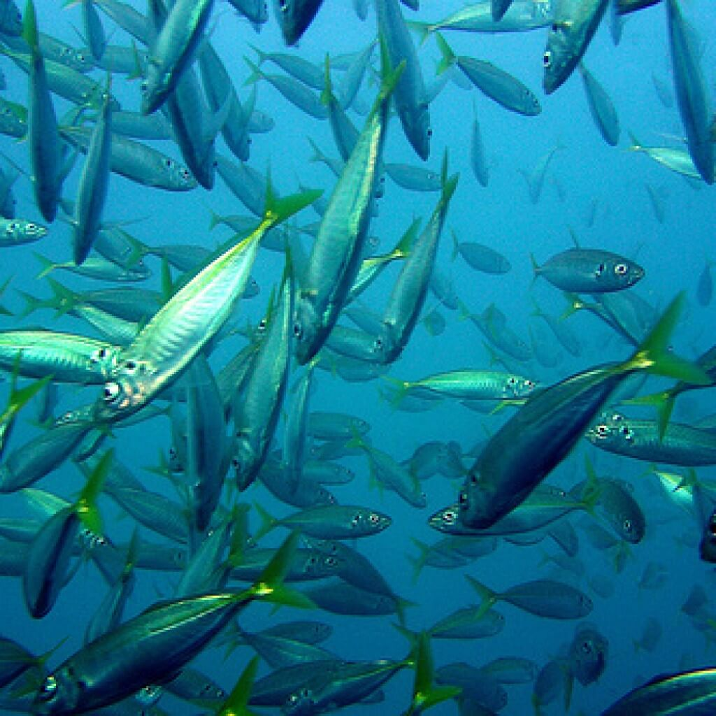 magas vérnyomású tengeri halak)