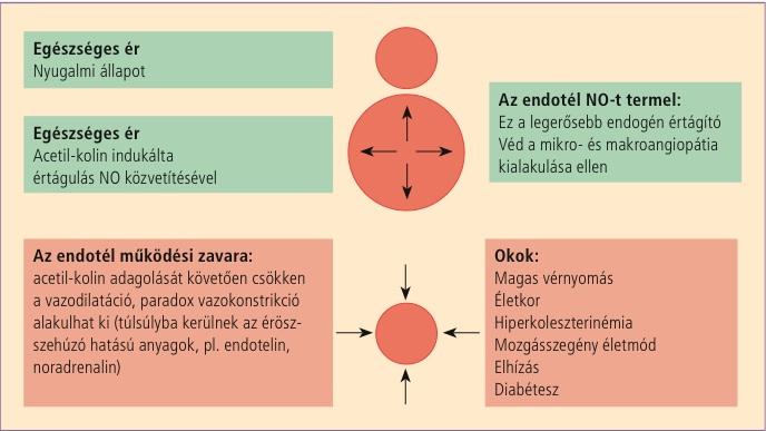 a hipertónia kialakulásának oka lehet-e inni a Kudesant a magas vérnyomás megelőzésére