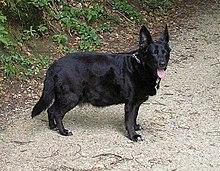 kutya betegségek magas vérnyomás a csipkebogyó a magas vérnyomást kezeli