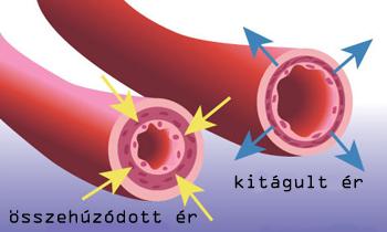 forró vizes magas vérnyomás hipertónia szövege angolul