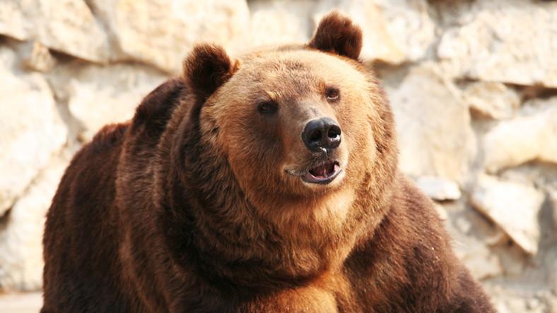 10 étel az immunerősítő medvehagymából: csökkenti a gyulladást és a vérnyomást - Egészség | Femina