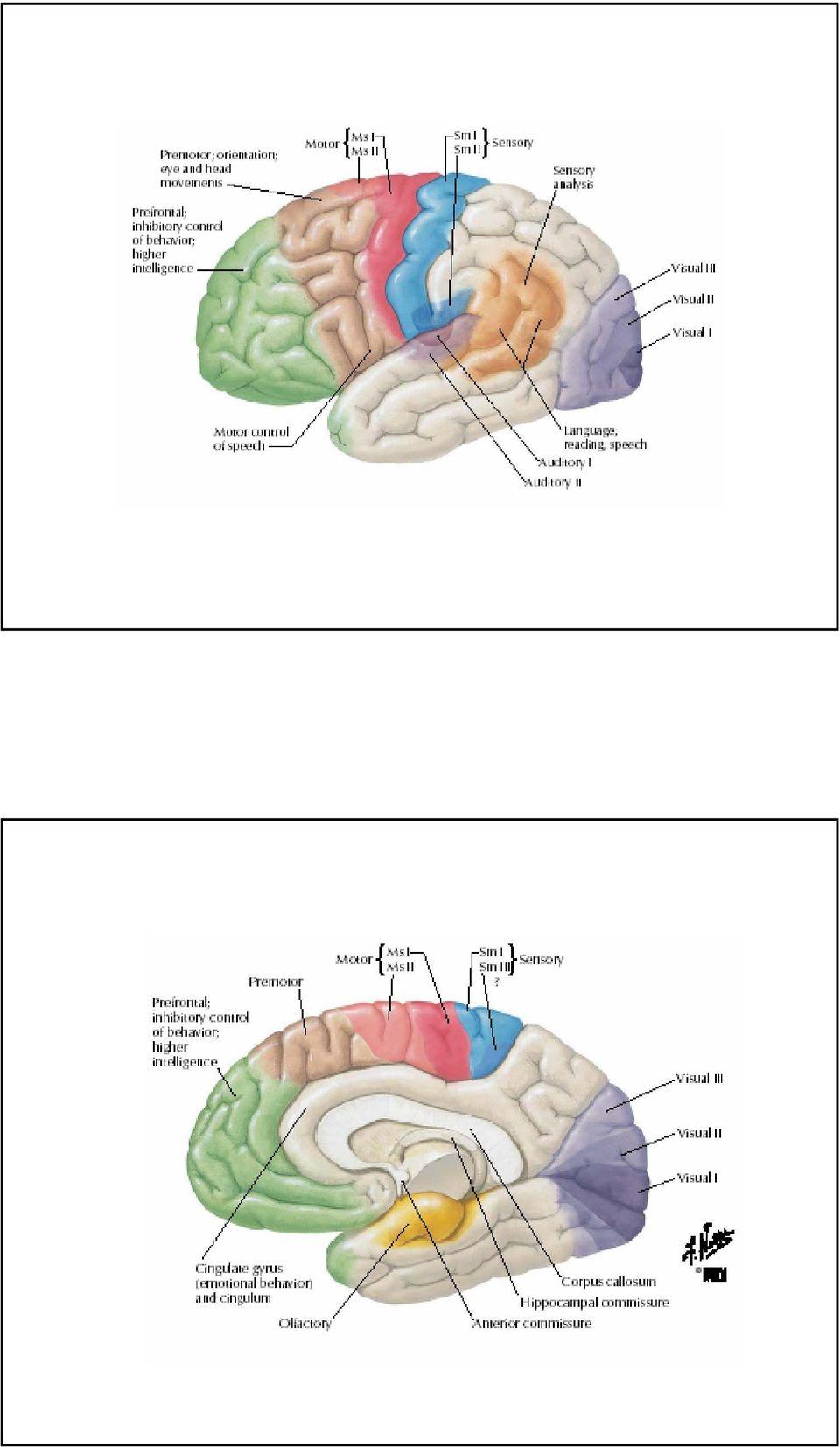 temporális lebeny hipertónia)
