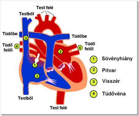 magas vérnyomás kezelése asd)